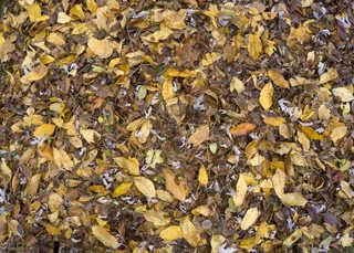 Leaf terrain 0011