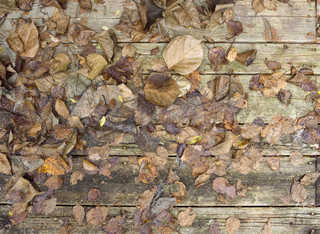 Leaf terrain 0012