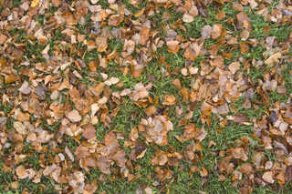 Leaf terrain 0013