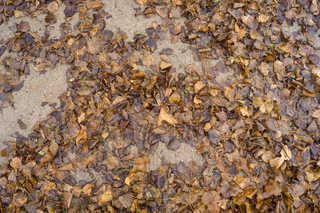 Leaf terrain 0015