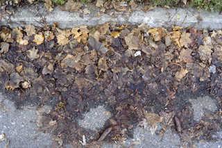 Leaf terrain 0017
