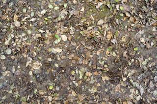 Leaf terrain 0018