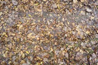Leaf terrain 0019