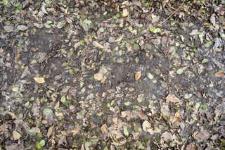 Leaf terrain 0020