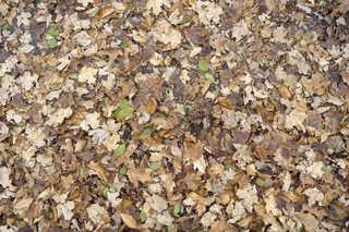 Leaf terrain 0021