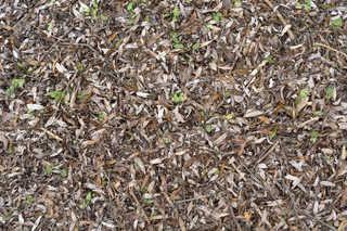 Leaf terrain 0022
