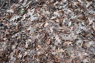 Leaf terrain 0024