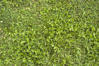 Leaf terrain 0026