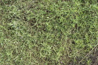 Leaf terrain 0027