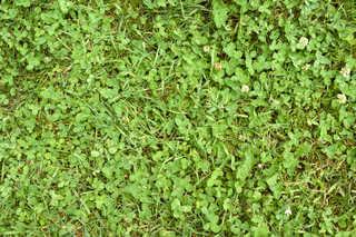 Leaf terrain 0028