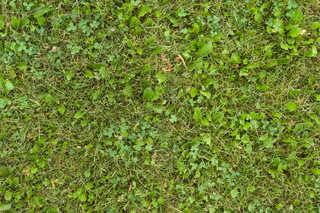 Leaf terrain 0030