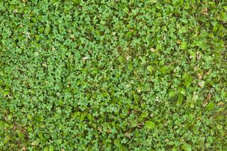Leaf terrain 0031