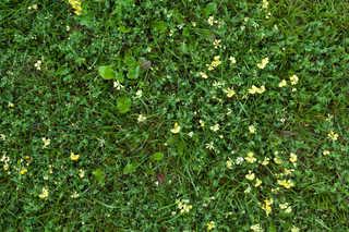 Leaf terrain 0033