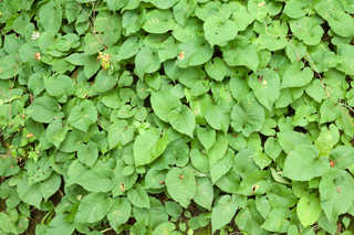 Leaf terrain 0034