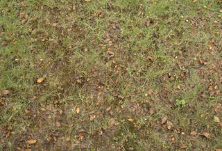 Leaf terrain 0036