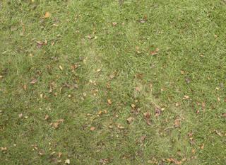 Leaf terrain 0037
