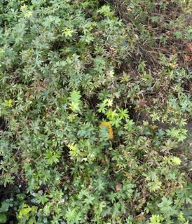 Leaf terrain 0038