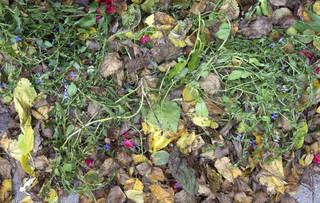 Leaf terrain 0039