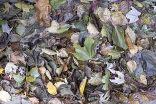 Leaf terrain 0040