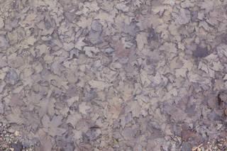 Leaf terrain 0043