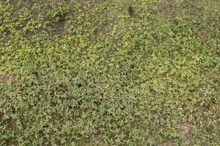 Leaf terrain 0044
