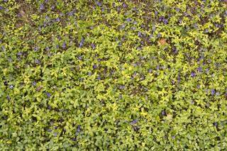 Leaf terrain 0045