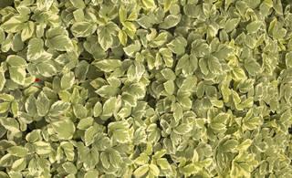 Leaf terrain 0050