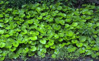 Leaf terrain 0051