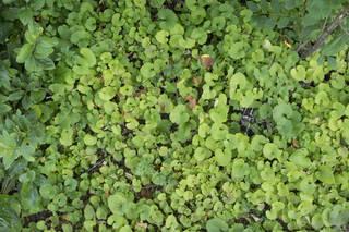 Leaf terrain 0052