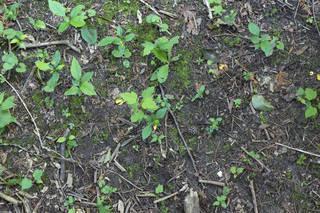 Leaf terrain 0053