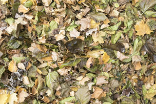 Leaf terrain 0054