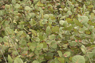 Leaf terrain 0056