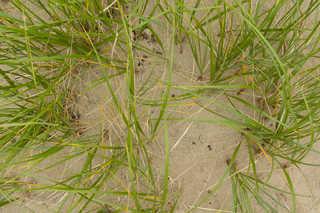 Sand terrain 0019
