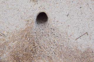 Sand terrain 0053