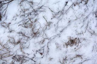 Snow terrain 0038