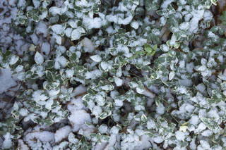 Snow terrain 0059