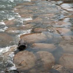 Foam and Rapids Category