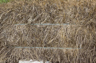 hay-and-straw_0015 texture