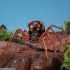 Transformers Masterpiece MP-46 Blackarachnia - Beast Wars - MIB