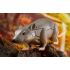 Transform Element TE-MM002 Mouse
