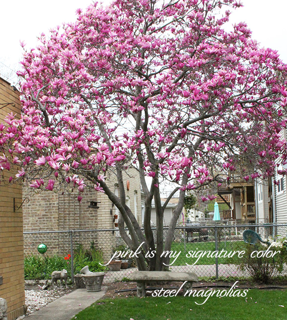 Steel Magnolias quote with pink magnolia tree image.