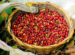 Brazil is the Worlds largest exporter of coffee