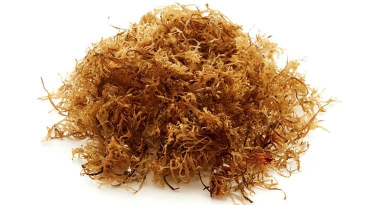Sea Moss, A Super Food Of Choice
