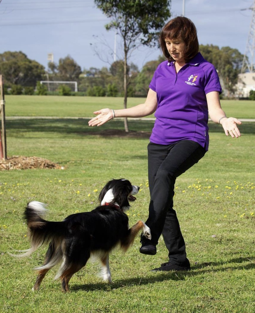 Canine freestyle: a selection of news