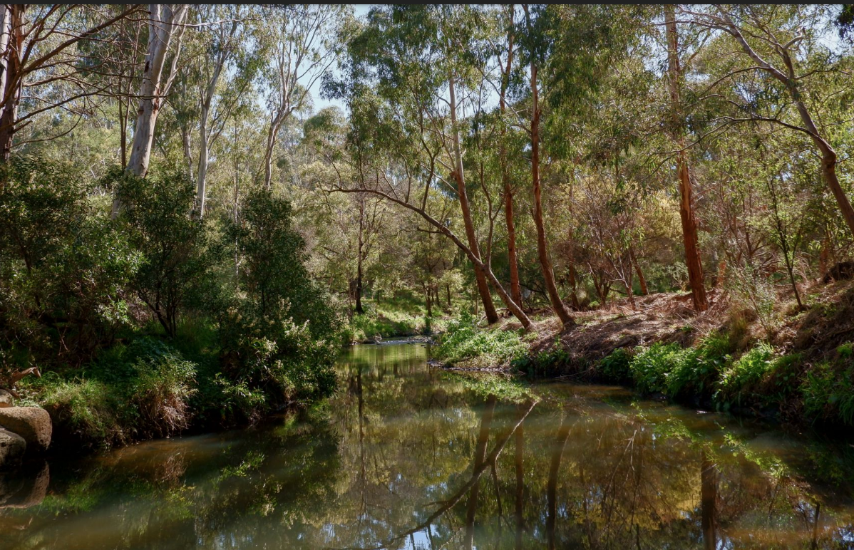 A clean, clear vision for Darebin Creek – just add people