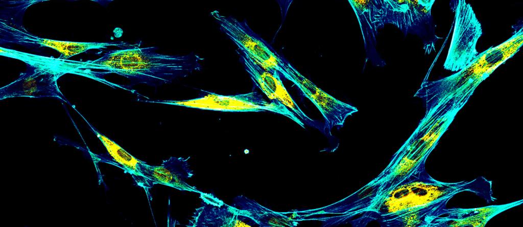 molecular-imaging