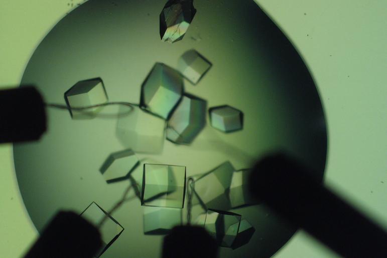Helix BioStructures Blog Post