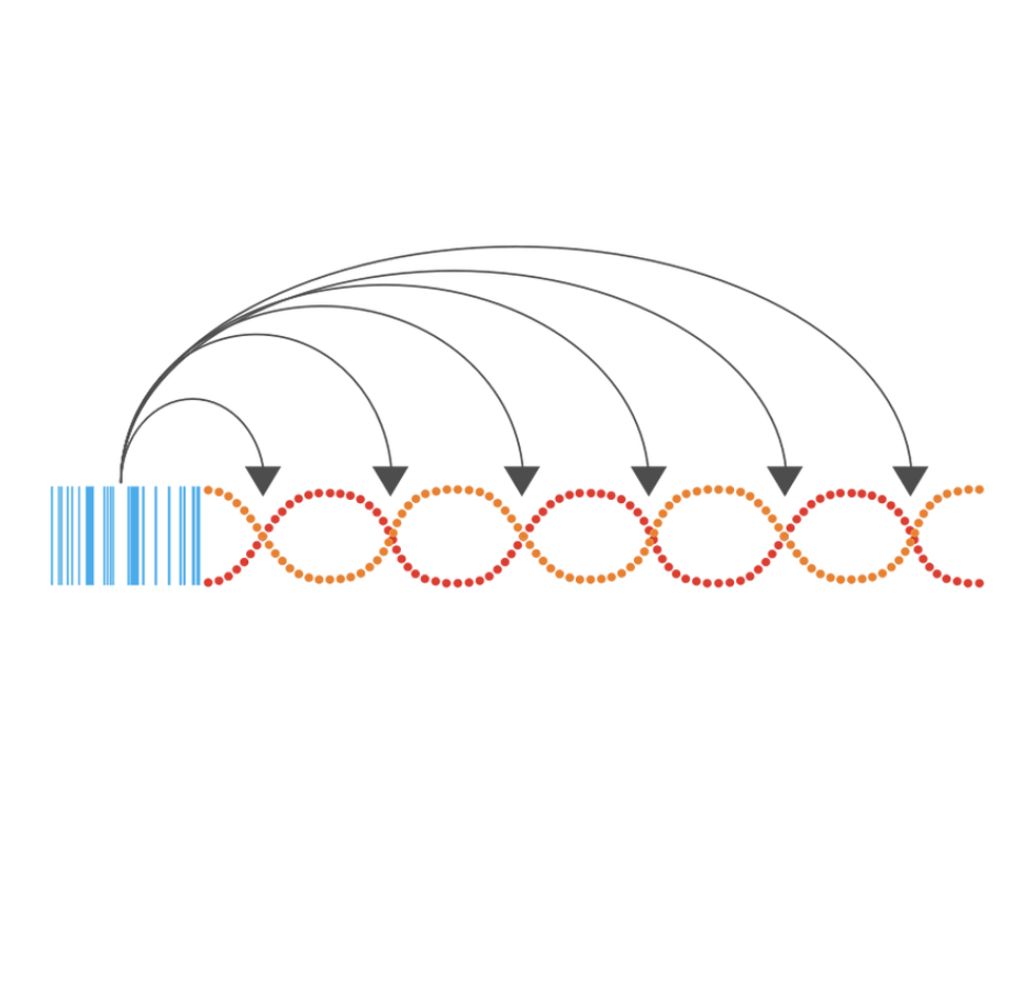 Loop Genomics Longread NGS