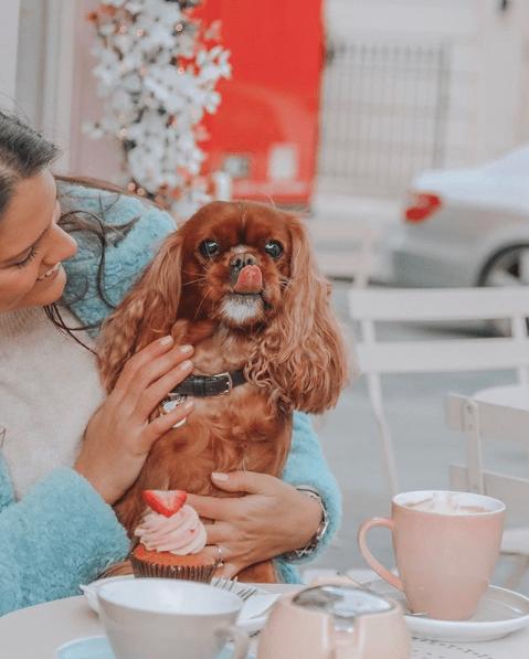 Amelia-Pet-Blogger