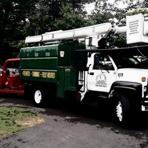 Solutions Tree service